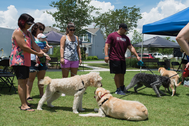 DAVID WEEKLEY HOMES PARTICIPATES IN DOG EVENT FOR CHARITY